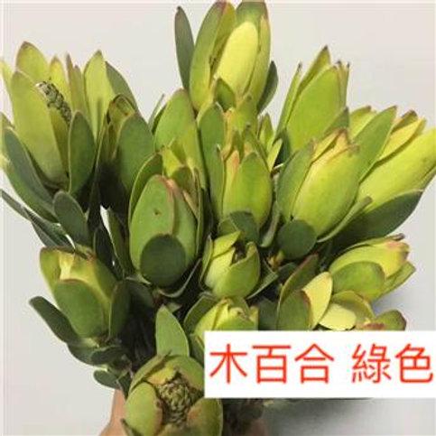 木百合 綠色  5枝