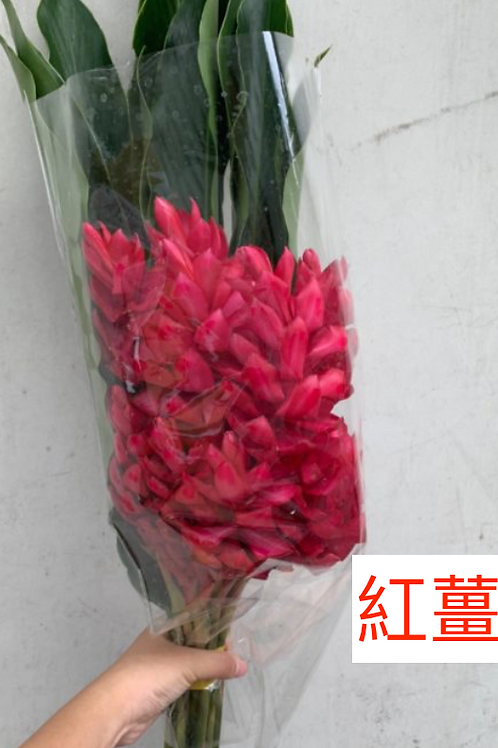 紅薑花 紅色 產地台灣 8枝送2枝