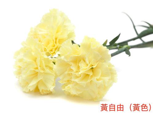 康乃馨(大丁)黃自由(黃色)產地昆明 18枝送2枝共20枝