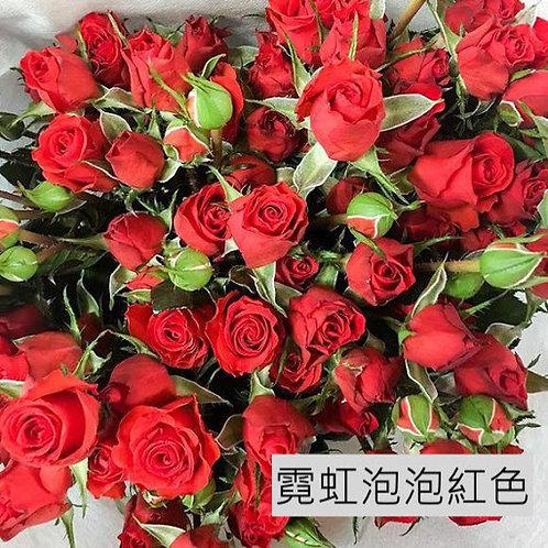 多頭小玫瑰 霓虹泡泡(紅色)產地昆明 8枝送2枝共10枝