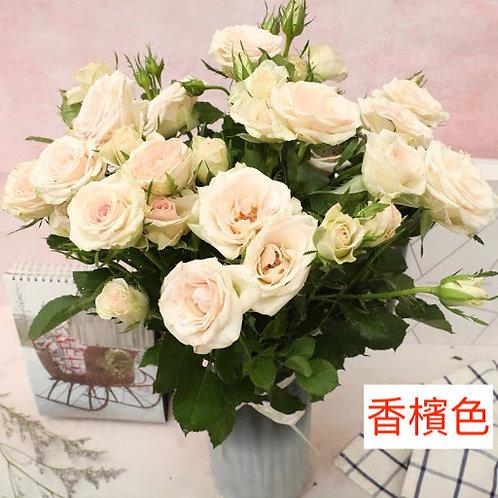 多頭小玫瑰 香檳色 產地昆明 8枝送2枝共10枝