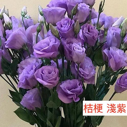 桔梗 淺紫 產地昆明 8枝送2枝共10枝