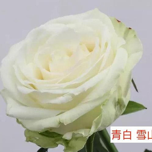 玫瑰 青白 雪山 產地昆明 18枝送2枝共20枝