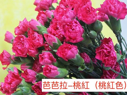 多頭康乃馨 (小丁)芭芭拉-桃紅(桃紅色) 產地昆明 18枝送2枝共20枝