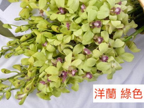 洋蘭 綠色 產地昆明 8枝送2枝共10枝