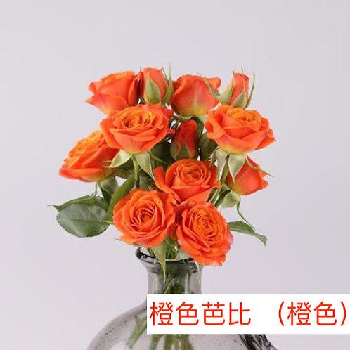多頭小玫瑰 橙色芭比 (橙色)產地昆明 8枝送2枝共10枝