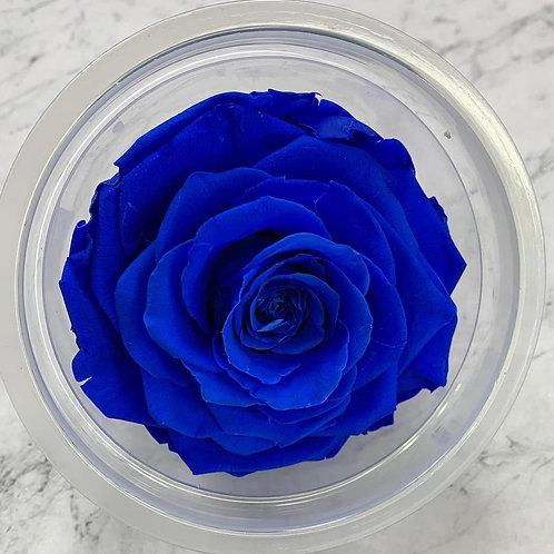 保鮮花玫瑰(5-6cm直徑)(藍紫色系)