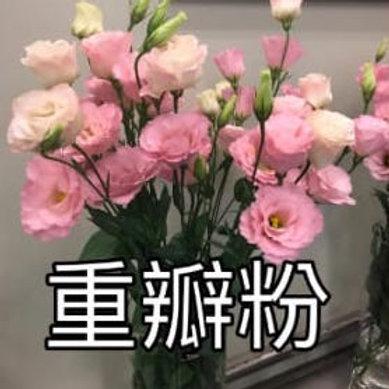 桔梗 重瓣粉 產地台灣 8枝送2枝共10枝
