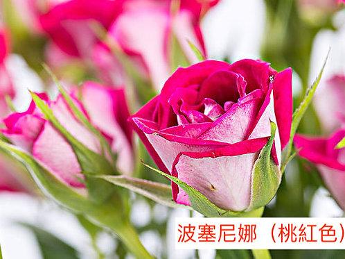 多頭小玫瑰 波塞尼娜(桃紅色)產地昆明 8枝送2枝共10枝