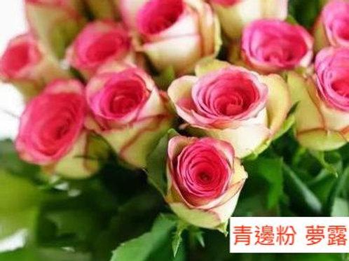 玫瑰 青邊粉 夢露 產地昆明 18枝送2枝共20枝