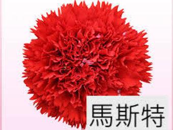 康乃馨(大丁)馬斯特(紅色)產地昆明 18枝送2枝共20枝