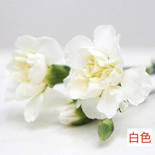 多頭康乃馨 (小丁)白色 產地昆明 18枝送2枝共20枝