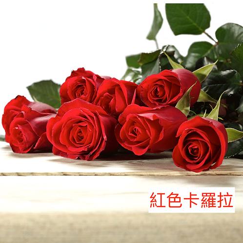 玫瑰 紅色卡羅拉 產地昆明 一枝