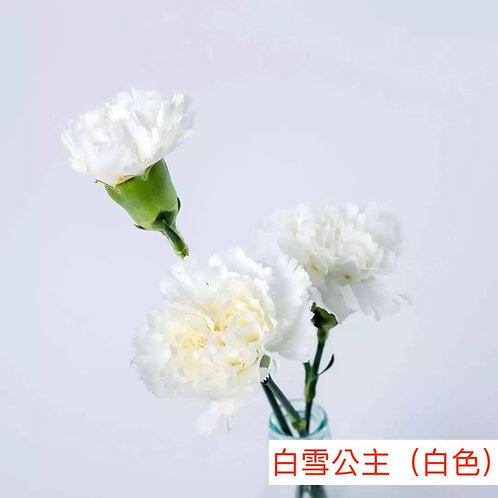 康乃馨(大丁)白雪公主(白色)產地昆明 18枝送2枝共20枝