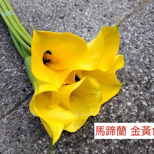 馬蹄蘭 金黃色 產地昆明 8枝送2枝