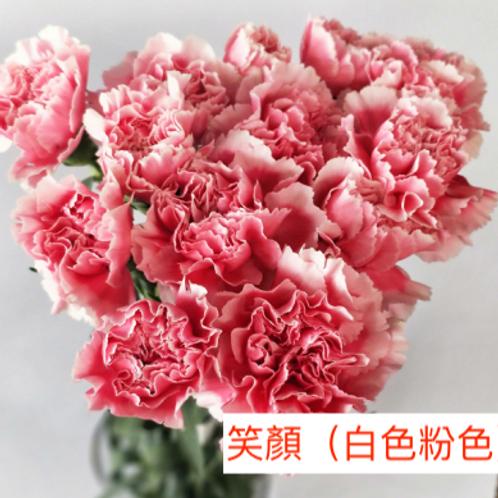 康乃馨(大丁)笑顏(白色粉色)產地昆明 18枝送2枝共20枝