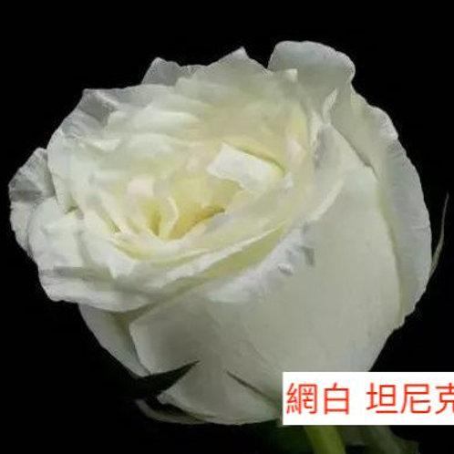 玫瑰 網白 坦尼克 產地昆明 18枝送2枝共20枝