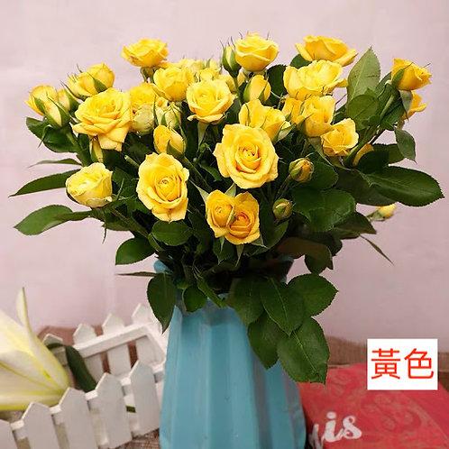 多頭小玫瑰 黃色 產地昆明 8枝送2枝共10枝
