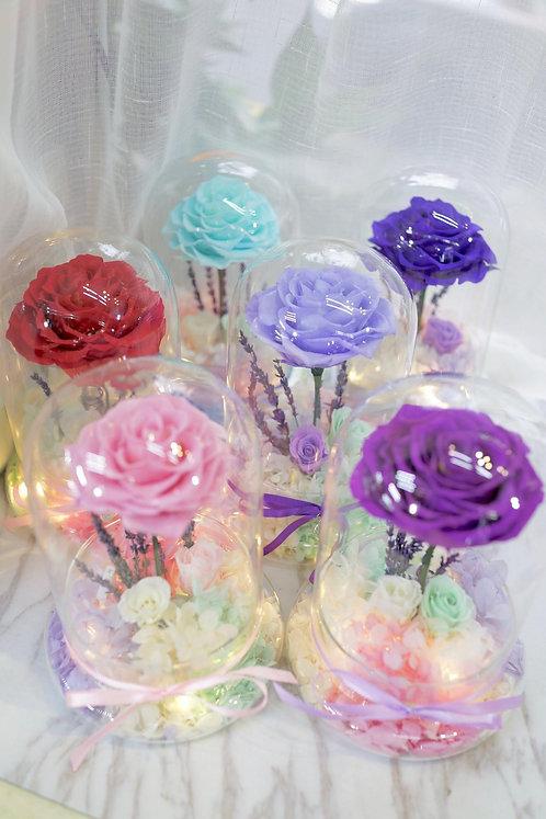 現貨Lighting La Belle Rose - 夜光貝兒玫瑰系列(多色可選)PFLLB