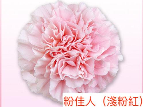 康乃馨(大丁)粉佳人(淺粉紅)產地昆明 18枝送2枝共20枝
