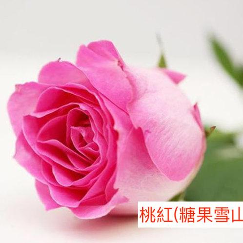 玫瑰 桃紅 糖果雪山 產地昆明 18枝送2枝共20枝