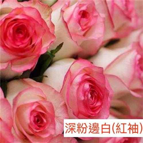 玫瑰 深粉邊白 紅袖 產地昆明 18枝送2枝共20枝