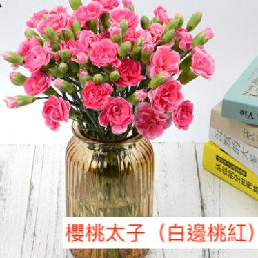 多頭康乃馨 (小丁)櫻桃太子(白邊桃紅)產地昆明 18枝送2枝共20枝