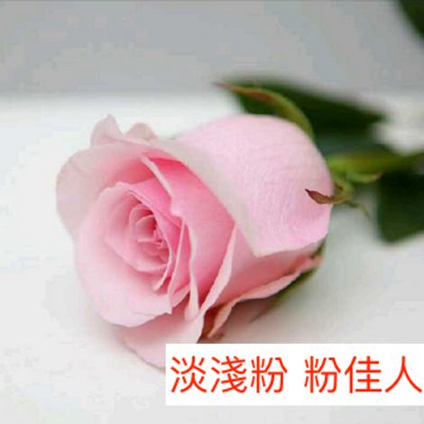 玫瑰 淡淺粉 粉佳人 產地昆明 18枝送2枝共20枝