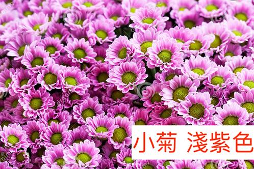 多頭小菊 淺紫色 產地昆明 8枝送2枝