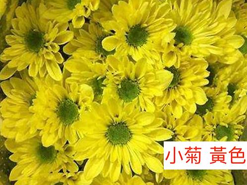 多頭小菊 黃色 產地昆明 8枝送2枝