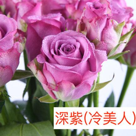 玫瑰 深紫 冷美人 產地昆明 18枝送2枝共20枝