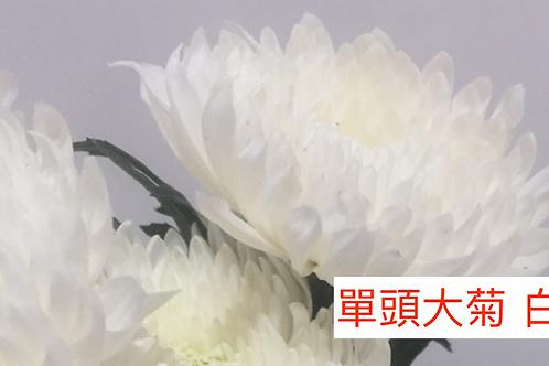 單頭大菊 白色 產地昆明 8枝送2枝