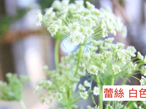 飛香(蕾絲)白色 產地昆明 8枝送2枝