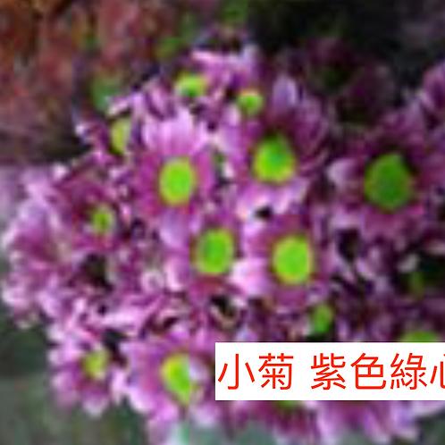 多頭小菊 紫色綠心 產地昆明 8枝送2枝