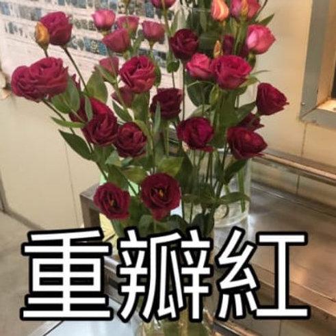 桔梗 重瓣紅 產地台灣 8枝送2枝共10枝