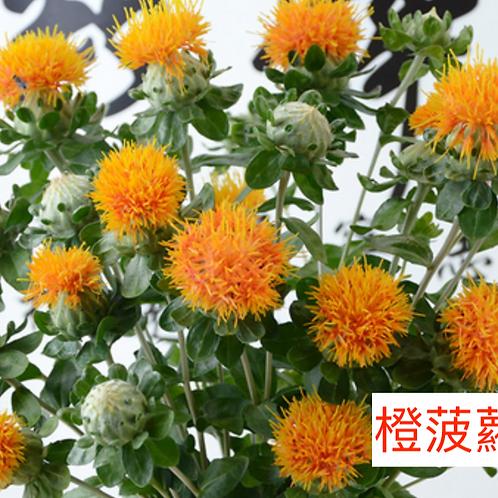 橙菠蘿 5枝