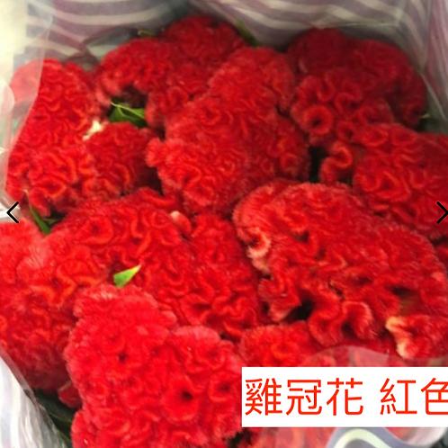 雞冠花 紅色 產地台灣 8枝送2枝