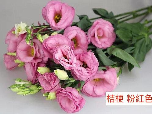 桔梗 粉紅色 產地昆明 8枝送2枝共10枝