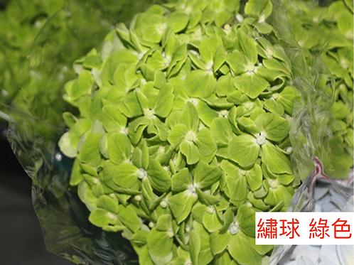 繡球 綠色 產地昆明 一個