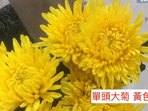 單頭大菊 黃色 產地昆明 8枝送2枝