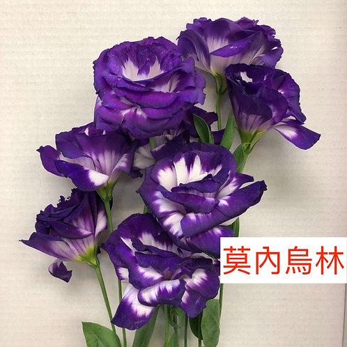 桔梗 莫內烏林 紫白 產地台灣 8枝送2枝共10枝
