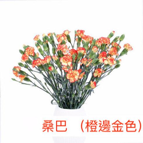 多頭康乃馨 (小丁)桑巴 (橙邊金色)產地昆明 18枝送2枝共20枝