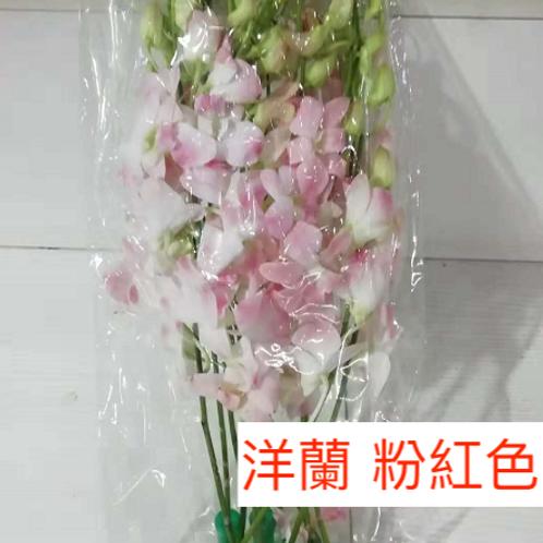 洋蘭 粉紅色 產地昆明 8枝送2枝共10枝