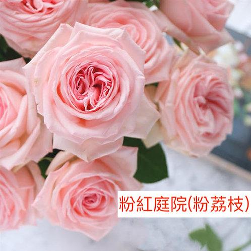 玫瑰 粉紅庭院 粉荔枝 產地昆明 18枝送2枝共20枝