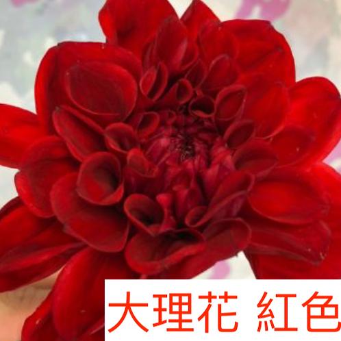 大理花 紅色 產地台灣 8枝送2枝