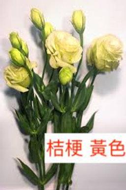 桔梗 黃色 產地昆明 8枝送2枝共10枝