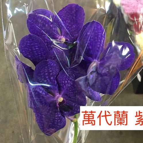 萬代蘭 紫色 產地台灣 1枝