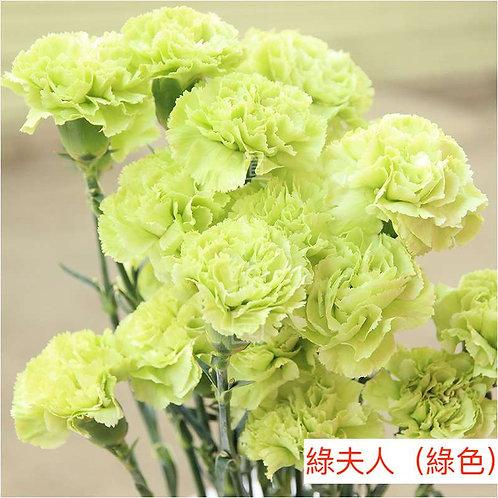 康乃馨(大丁)綠夫人(綠色)產地昆明 18枝送2枝共20枝