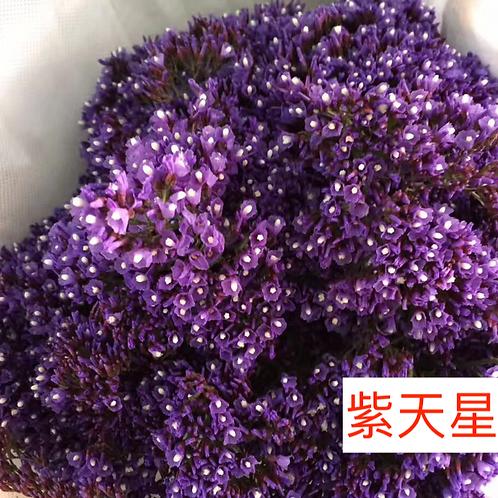 紫天星 8枝送2枝