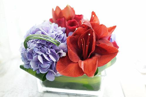 朱頂蘭鮮花擺設 Amaryllis Flower Decorate